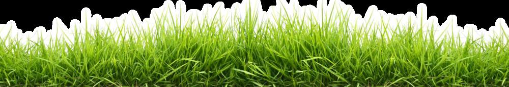widescreen-grass